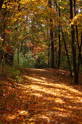 Photograph - Fall Woods by Kevin Schrader