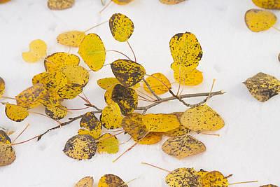 Fallen Autumn Aspen Leaves Print by James BO  Insogna