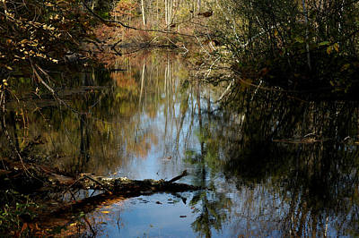 Photograph - Fallen Beauty by LeeAnn McLaneGoetz McLaneGoetzStudioLLCcom