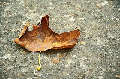 Photograph - Fallen by Cheri Randolph