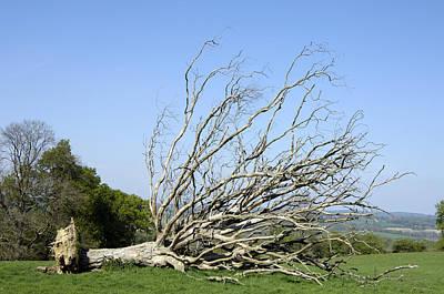 Fallen Dead Tree Art Print