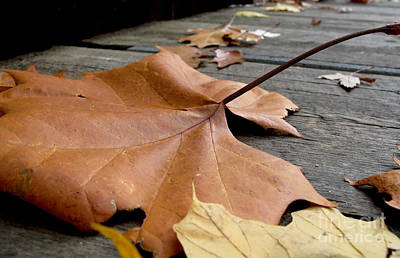 Fallen Leaf Art Print by Jack Schultz