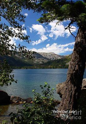 Photograph - Fallen Leaf Lake by Patrick Witz