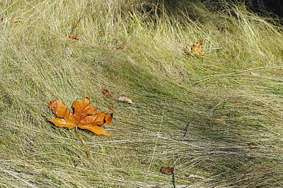 Photograph - Fallen Leaf by Marilyn Wilson