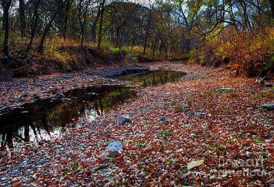 Photograph - Fallen Leaves by Fred Lassmann