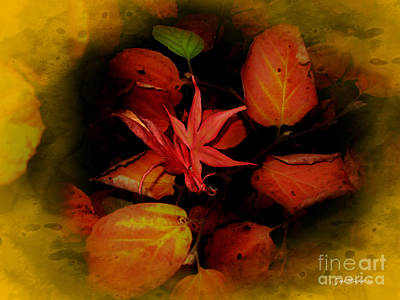 Photograph - Fallen Leaves by Joan  Minchak