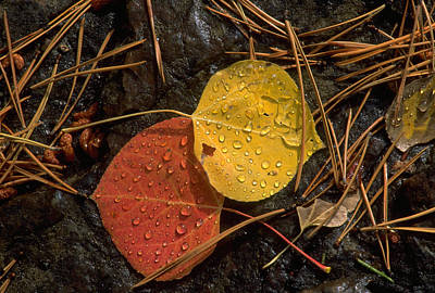 Photograph - Fallen Leaves by John Farley