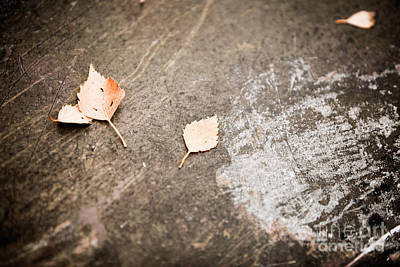 Photograph - Fallen Leaves by Kati Finell