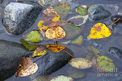 Photograph - Fallen Leaves Of Autumn by Sharon Talson