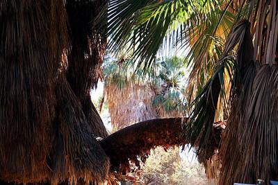 Photograph - Fallen Palm by Amelia Painter