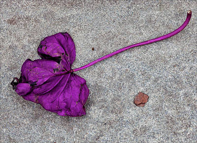 Fallen Purple Leaf Print by Robert Ullmann