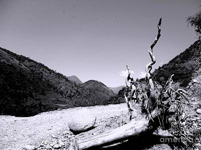 Photograph - Fallen Tree by Hari Om Prakash