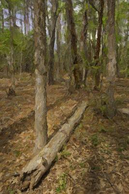 Fallen Tree In Forest Print by M K  Miller