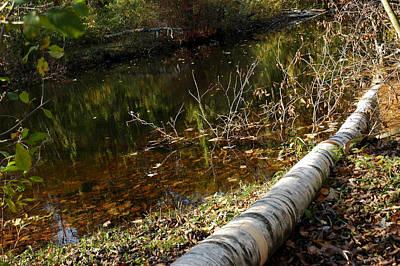 Photograph - Fallen Tree Path by LeeAnn McLaneGoetz McLaneGoetzStudioLLCcom