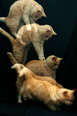 Falling Cat Art Print by Micael  Carlsson