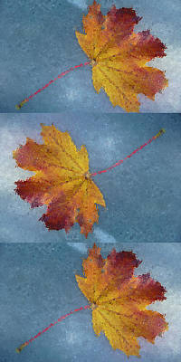Photograph - Falling Leaves by Margie Avellino