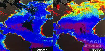 False-colour Satellite Images Print by Dr. Gene Feldman, NASA Goddard Space Flight Center
