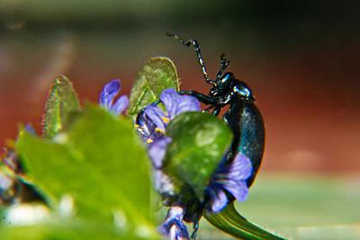 Nirvana - False Darkling Beetle 2 by Douglas Barnett
