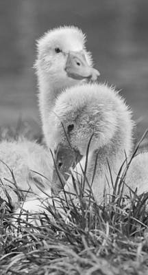Photograph - Family Matters by Steven Poulton