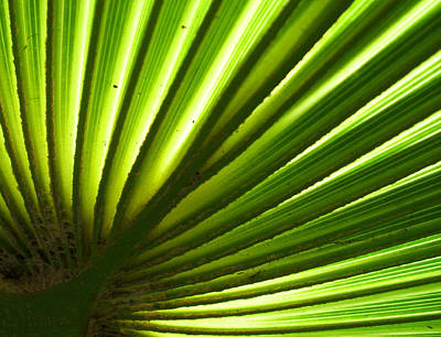 Art Print featuring the photograph Fan Frond by Ginny Schmidt
