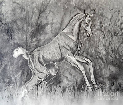 Drawing - Fancifilly by Suzette Kallen