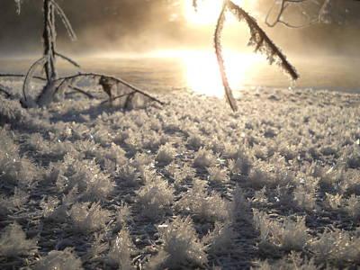 Photograph - Fanciful Frosty Fractal Forest by Kent Lorentzen