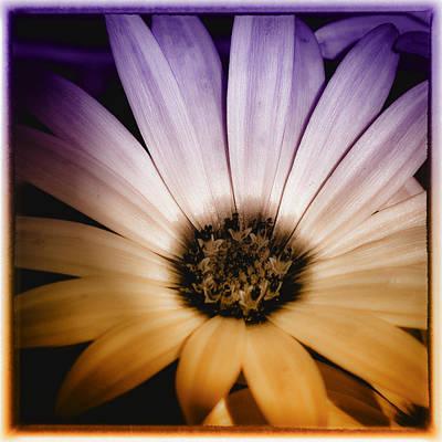 Digital Photograph - Fantasy Daisy IIi by David Patterson