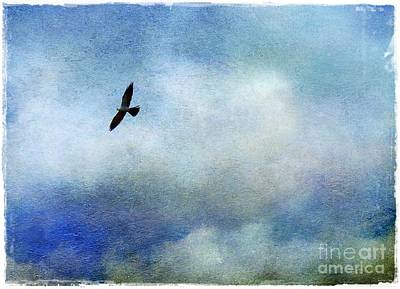 Mississippi Kite Photograph - Far Above by Judi Bagwell