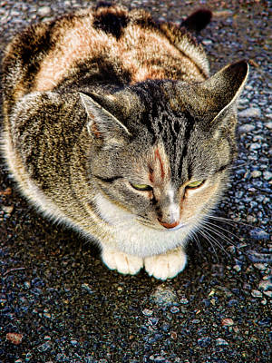 Photograph - Farm Cat by Colleen Kammerer