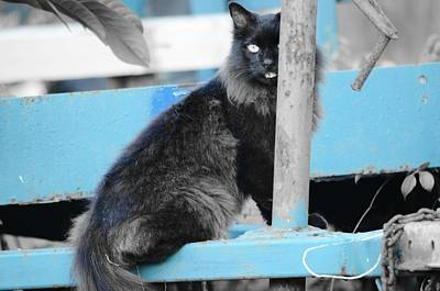 Photograph - Farm Kitty On Blue Wagon by Wibada Photo