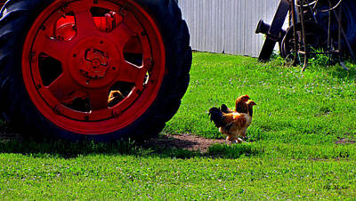 Photograph - Farm Life by Ms Judi