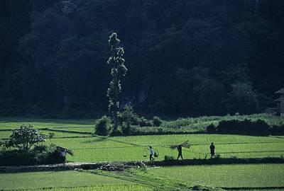Transportation Of Goods Photograph - Farmers Between Rice Paddies, Yangdi by Raymond Gehman