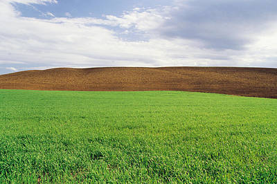 Jul08 Photograph - Farmland With Early Growth Grain by Dave Reede