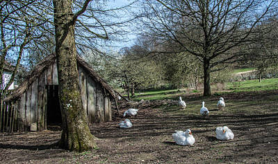 Farmyard Geese Print by Dawn OConnor