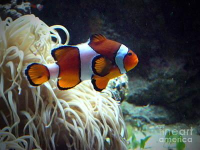 Clown Fish Photograph - Fashion Show by Ming Yeung