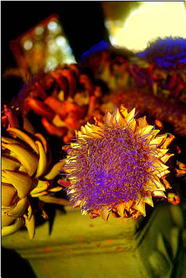 Photograph - Fauvist Thistle by Diane montana Jansson