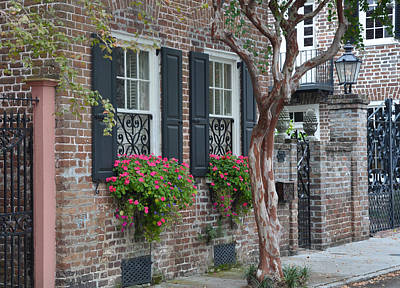 Photograph - Favorite Tradd Street Window Boxes by Lori Kesten