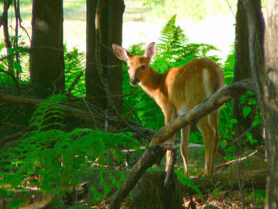 Fawn In The Woods Art Print by Artistic Photos