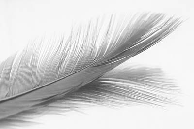 Photograph - Feather And Its Reflection In Black And White by Zoe Ferrie