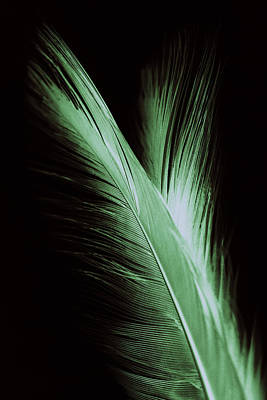 Photograph - Feather And Its Reflection by Zoe Ferrie