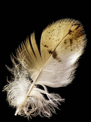 Photograph - Feather by Jean Noren