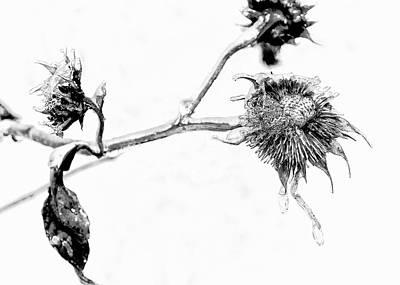 February Sunflower - 3 Original