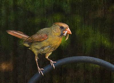 Photograph - Feeding Time by Steven Richardson