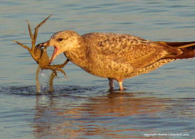 Photograph - Feelin Crabby by Andrea Linquanti