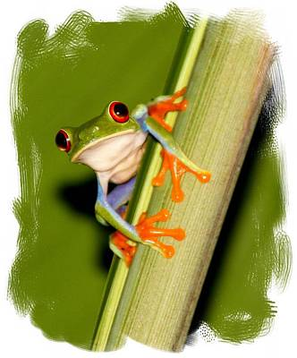 Art Print featuring the photograph Feeling Froggy by Myrna Bradshaw