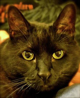 Le Cat Photograph - Felix by Paula Deutz