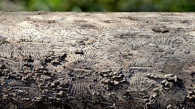 Fell By The Mighty Bark Beetle Art Print