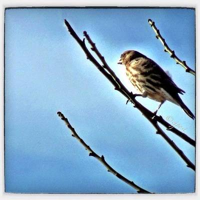 Finch Wall Art - Photograph - Female House Finch Catching The Morning by Cynthia Post