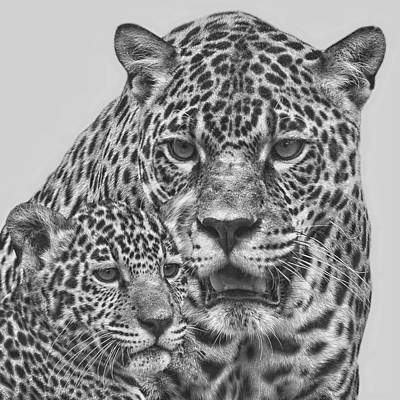 Black And White Cat Digital Art - Female Jaguar And Cub by Larry Linton