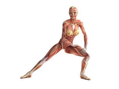 Female Muscles, Artwork Art Print by Sciepro
